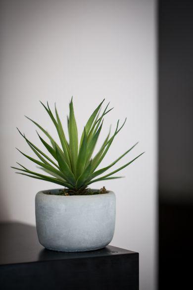 plante 1001 beauté la Rochelle hammam institut beauté